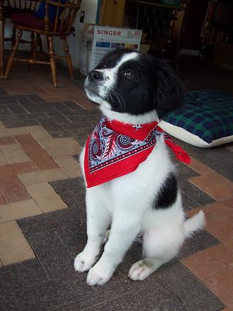 Jester the wonder-dog